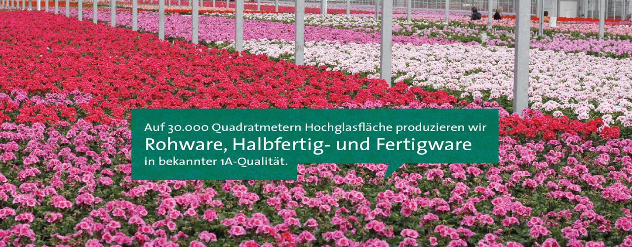 GartenbauKlein_30000qm-Produktionsflaeche