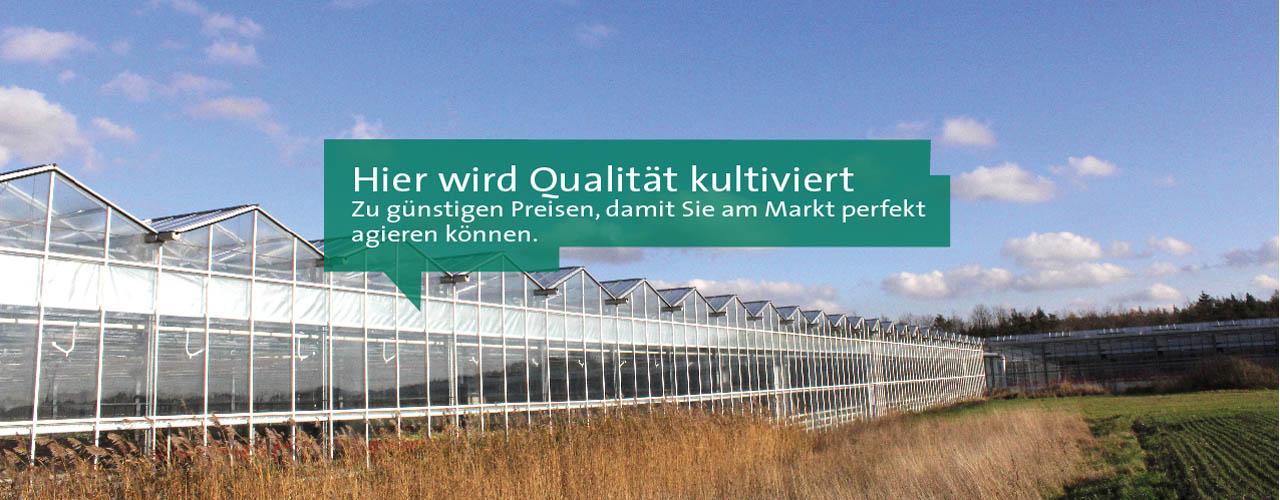 Gartenbau_Klein_Qualitätspflanzen