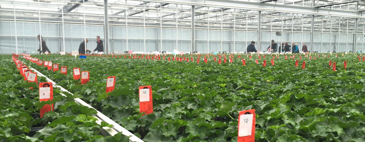 Gartenbau_Klein_Rootingstation